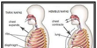 Nota Sains Tingkatan 3 Yang Bernilai Gkb 1053 Kemahiran Belajar Sains Tingkatan 3 Bab 1 Respirasi