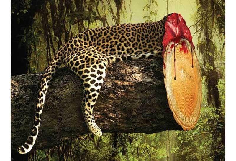 contoh poster lingkungan hidup 4 penebangan hutan liar