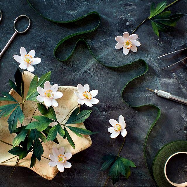 wood anemone nemorosa 640px dscf6082 bunga kertas