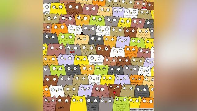 ilustrator cari panda kembali cari kucing dan burung hantu ilustrator mengunggah gambar teka teki