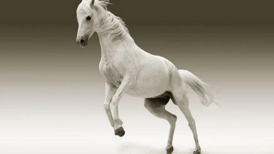 teka teki banyak banyak kuda kuda apa yang tak ada kaki