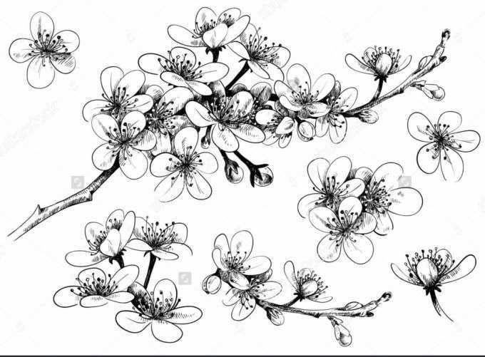 gambar bunga teratai untuk mewarnai auto electrical wiring diagram
